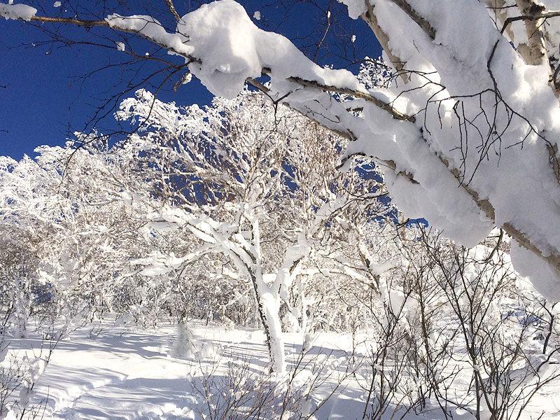キロロ積雪